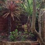 Clapham Garden (Part 2: Moving A Cordyline Australis)
