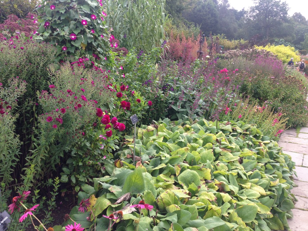Red hot border at RHS Wisley September 2014