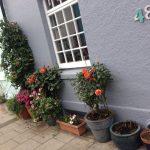 Brighton Pots: who needs a garden to garden?!