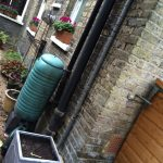 It's October and it's still warm! Bulb planting and drain pipe trellis time