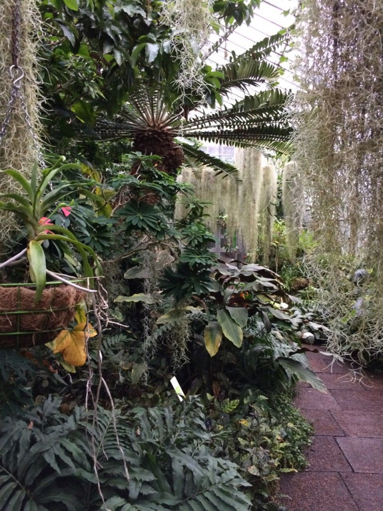 Another scene in one of the glasshouses