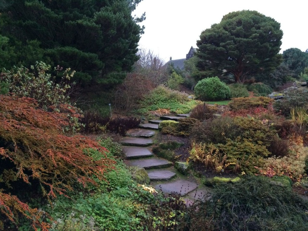 Woodland area going into the rockery