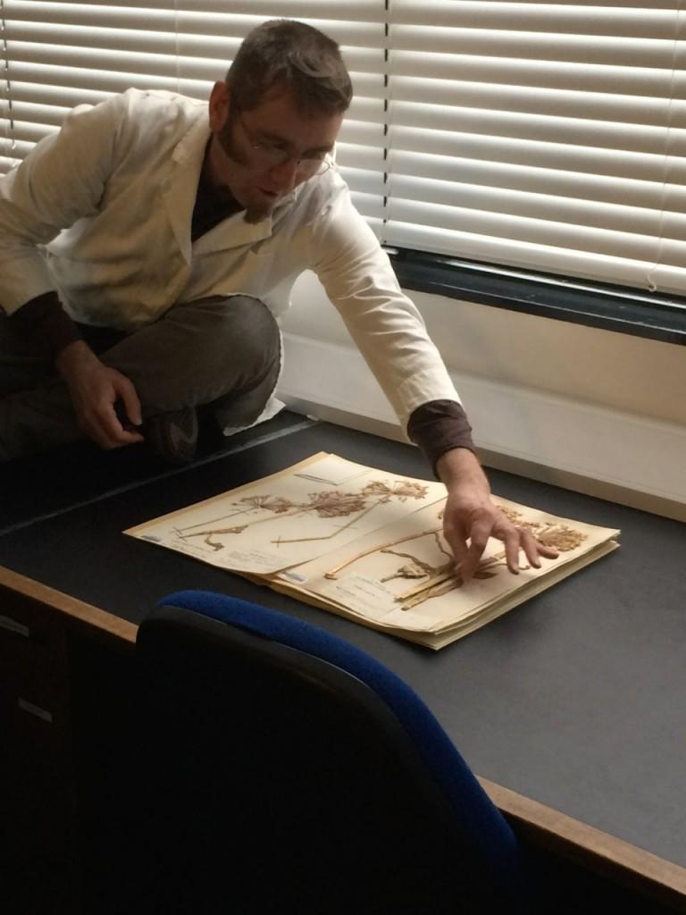 Greg showing us an Allium specimen