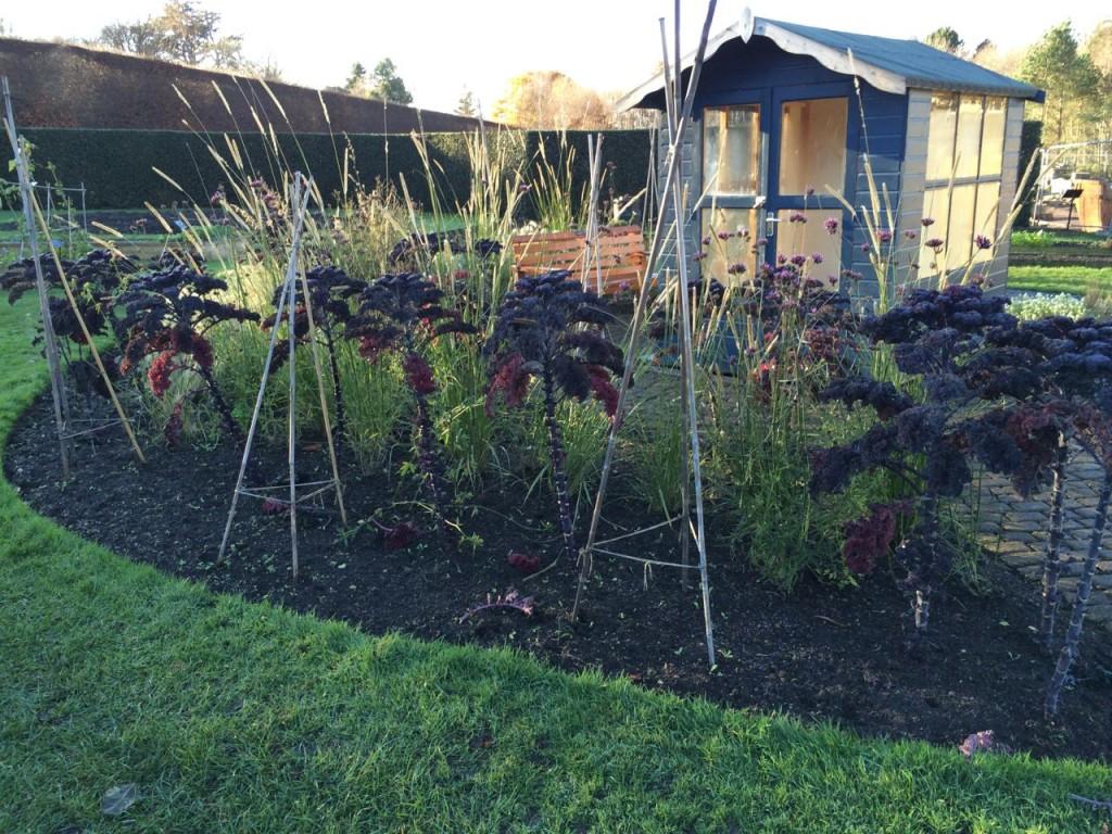 Interesting mix of Kale, Verbena bonariensis and grasses