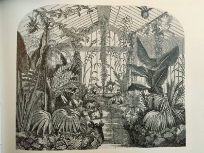 Victorians created glasshouses, bringing tropical plants to the UK (that would survive for the first time)