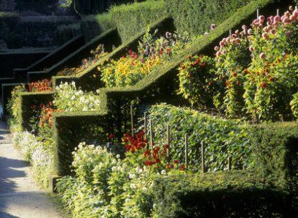 Victorian plantsman, James Bateman, created this incredible scientific and showy Dahlia walk at Biddulph Grange