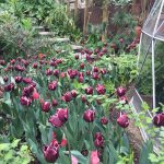 NGS 2015: 51 The Chase, Clapham by Charles Rutherfoord and Rupert Tyler