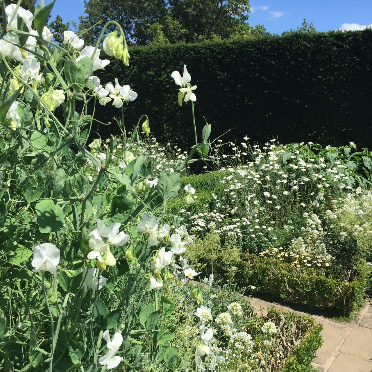 Sissinghurst's famous white garden