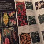 Review: RHS Encyclopaedia of Plants and Flowers by Christopher Brickell