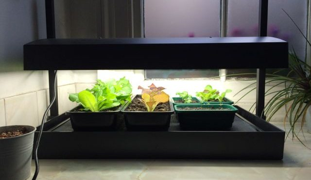 Review: Garland Grow Light Garden