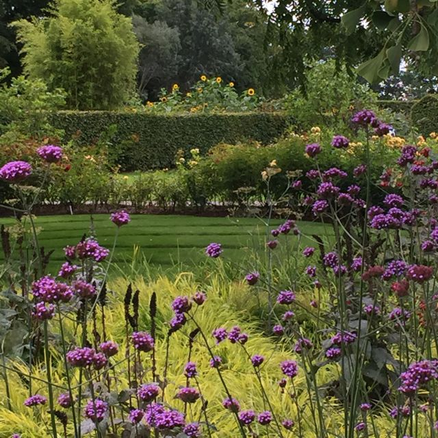 rhs-wisley-september-flower-show13