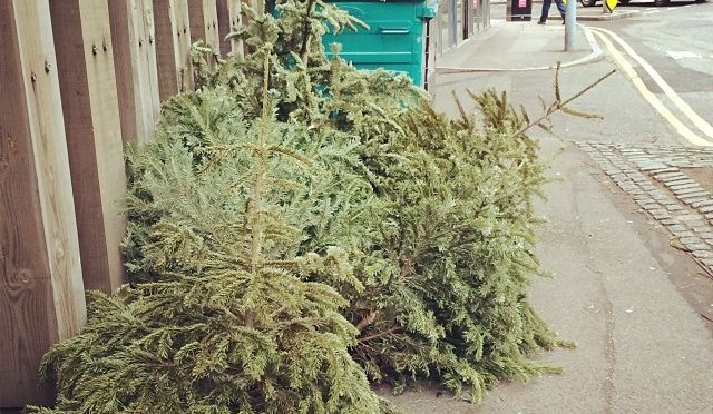 8 tips for buying a Christmas tree