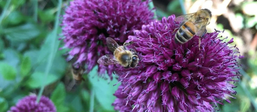 Top 6 Best Bee Magnet Flowers of 2015
