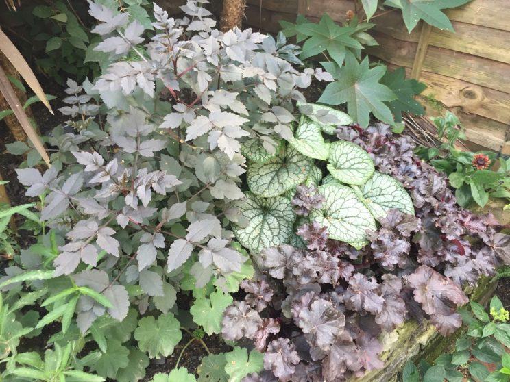 Dahlia Experiment Cultivars Put To The Test Jack Wallington Garden Design Ltd
