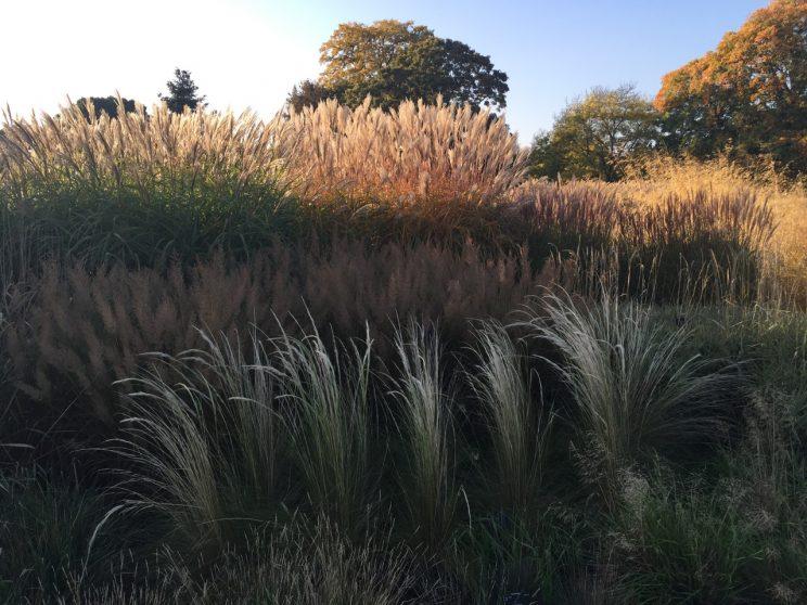 kew-gardens-autumn - 1