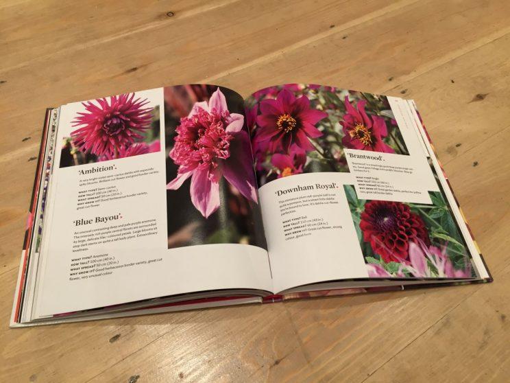 Plant Lover's Guide to Dahlias