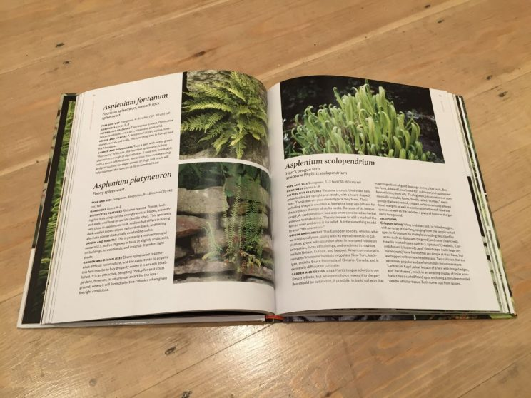 Plant Lover's Guide to Ferns