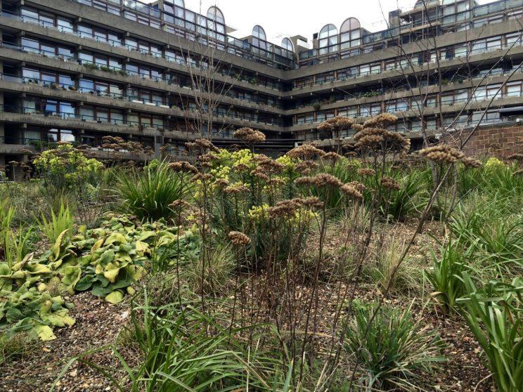 Barbican meadow planting