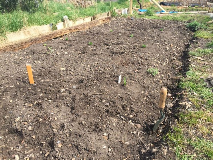 Prairie planting on allotment