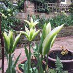 Pot's Growing On: April 2016