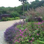 Brighton's futuristic municipal planting