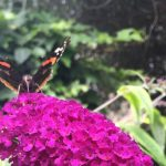 4 Fundamentals of attracting wildlife in urban gardens