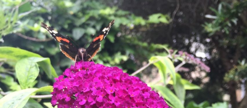 4 Fundamentals of attracting wildlife in urban gardens