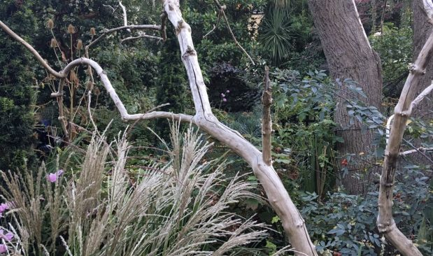 Diana Ross Garden Clapham