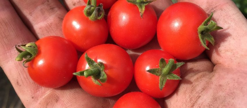 13 tips to help allotment newbies… by an allotment newbie!