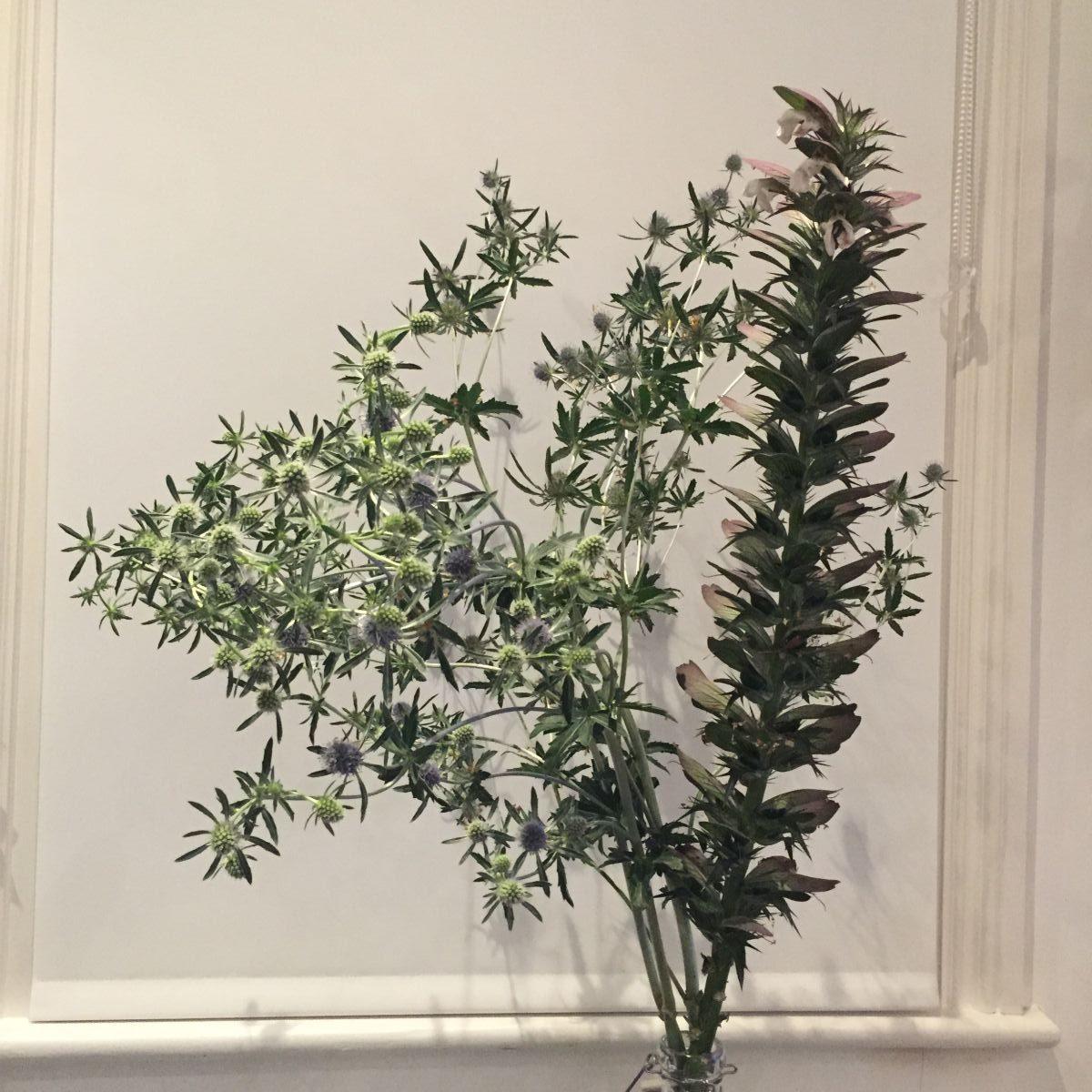 Acanthus, Eryingium, cut flowers