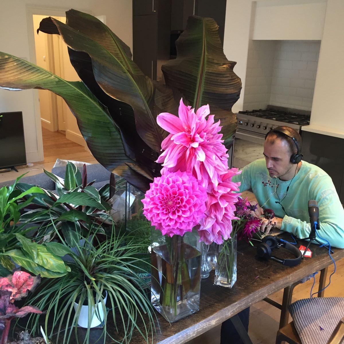Dahlia, banana, indoor plants, cut flowers