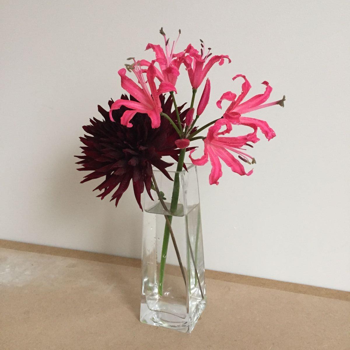 Dahlia, Nerine, cut flowers