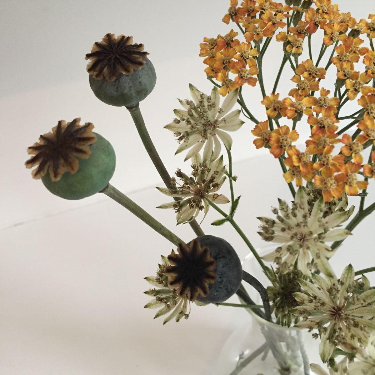 Astrantia, Papaver, cut flowers