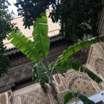 Marrakesh (Part Three): Islamic tiled courtyards at Bahia Palace