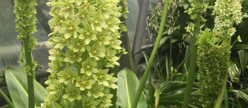 Let's make green flowers our naughty little secret