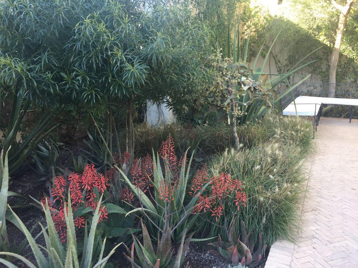 Marrakesh part five le jardin secret by tom stuart for Le jardin secret chicha