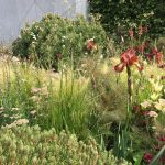 23 things at the RHS Chelsea Flower Show 2017