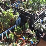 Motherload of incredible succulents on sale at our open day this Sunday