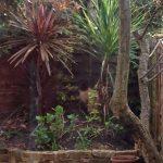 Clapham Garden (Part 2: Moving A Cordyline Australis)