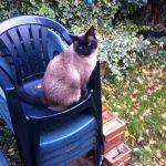 Our Garden, 25 November 2012