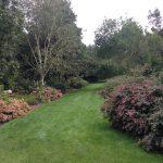Beware plastic netting in lawn and wildflower turf
