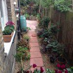 Clapham garden: Autumn is on the way