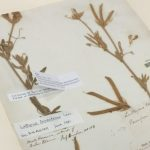 Why do we find botanical plant names hard to learn?