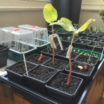 Pot's Growing on in March 2015? Keeping seedlings alive and watching the world come to life