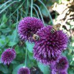 Top 6 Best Bee Magnet Flowers of 2015