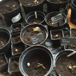 Does peat free compost work?