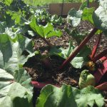 My Allotment: Month 5