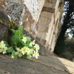 Rousham: getting to the heart of landscape garden design