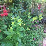 Summer highlights in our garden