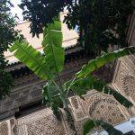 Marrakesh (Part Three): Islamic tiled courtyards at Bahia Palace